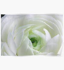 White White White Green Poster