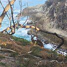 Wallaby (Kangaroo) at North Gorge Straddie by SpottiClogg
