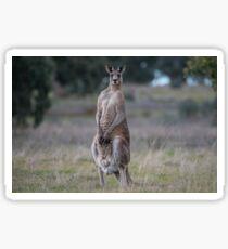 Kangaroo... Sticker