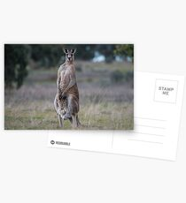 Kangaroo... Postcards