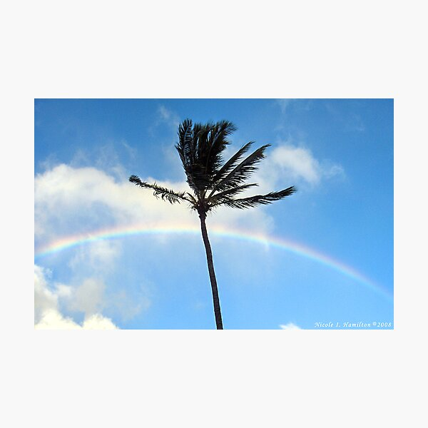 Palm Tree in the Sky Photographic Print