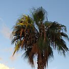 Palm by christinawalker