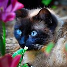 Siamese Cat Enjoying the Flower Bed by TJ Baccari Photography