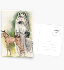 Arabian Postcards