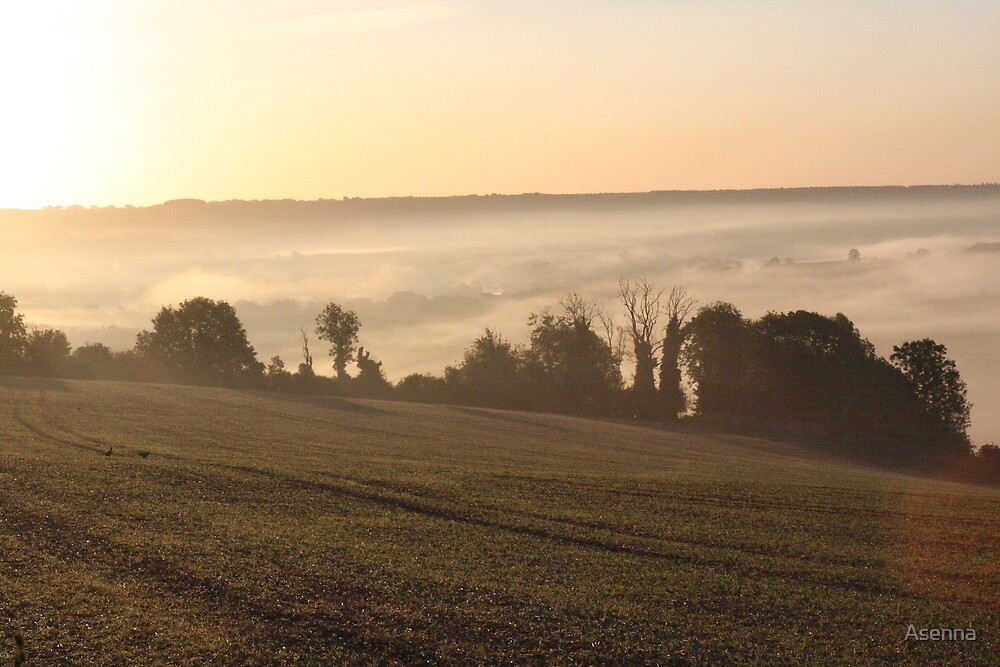 Morning Glory by Asenna