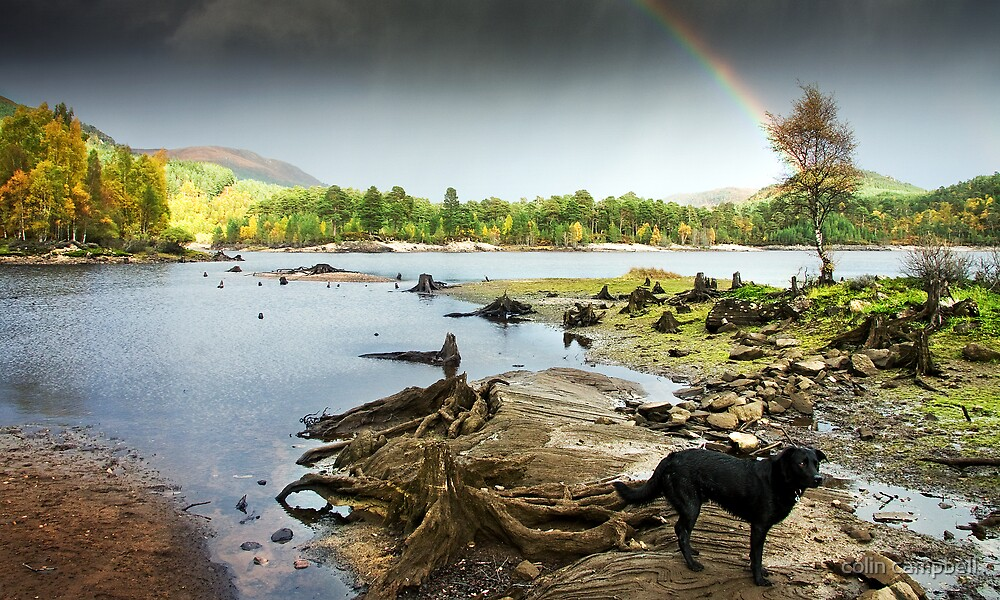 Affric stumps and rainbow by colin campbell