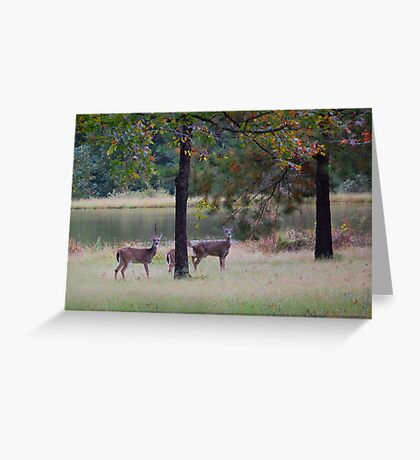 Backyard Neighbors Greeting Card