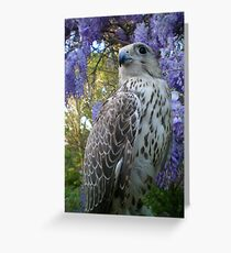 falco6 Greeting Card
