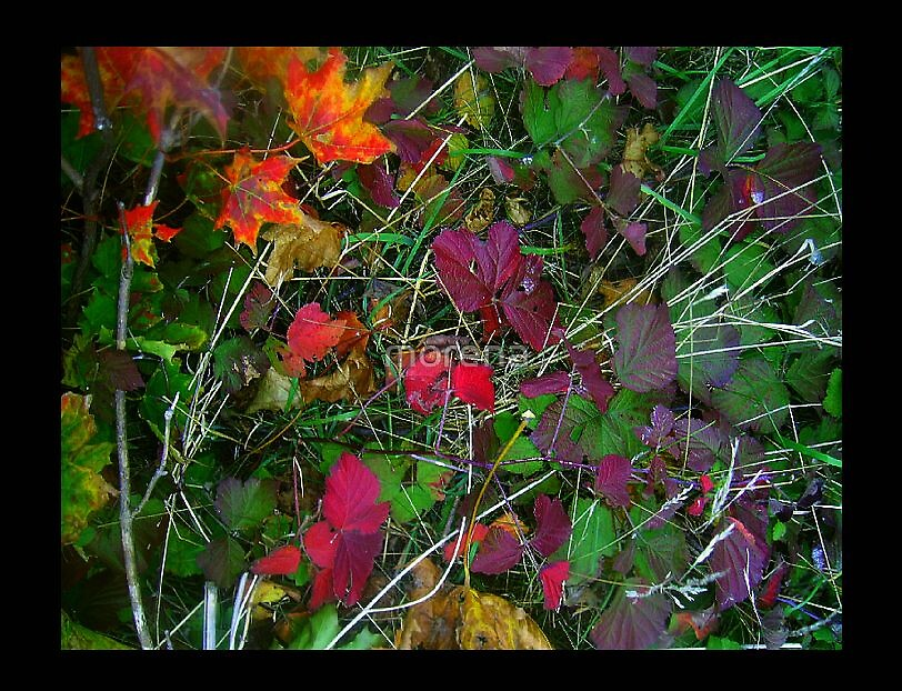 Fall composition  by morena