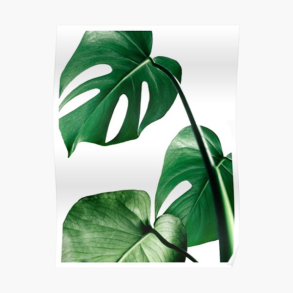 Leaf 1 Illustration Art Definition Poster Adventure Poster Abstract Wall Art