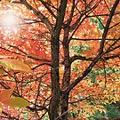 Autumn Canopy by duroo