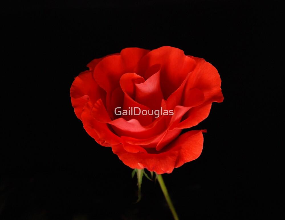 Red delight by GailDouglas