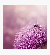 Beauty and the Bee Photographic Print