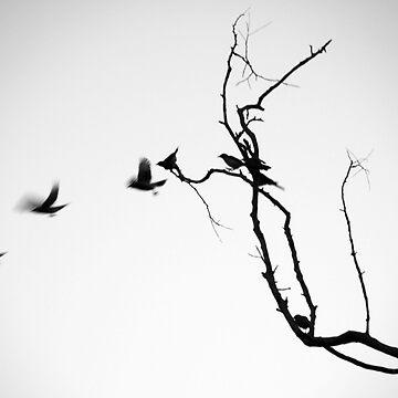 Birds in Flight by jessrobbo