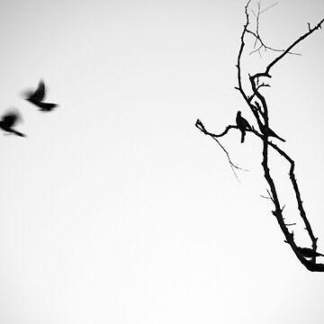 Birds in Flight 2 by jessrobbo