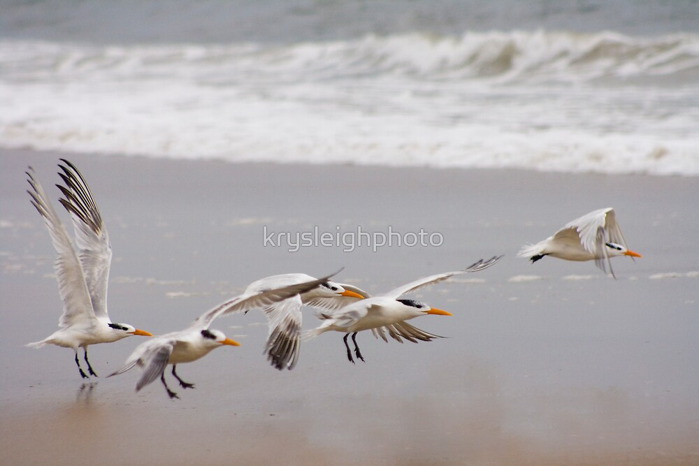 The flight by krysleighphoto