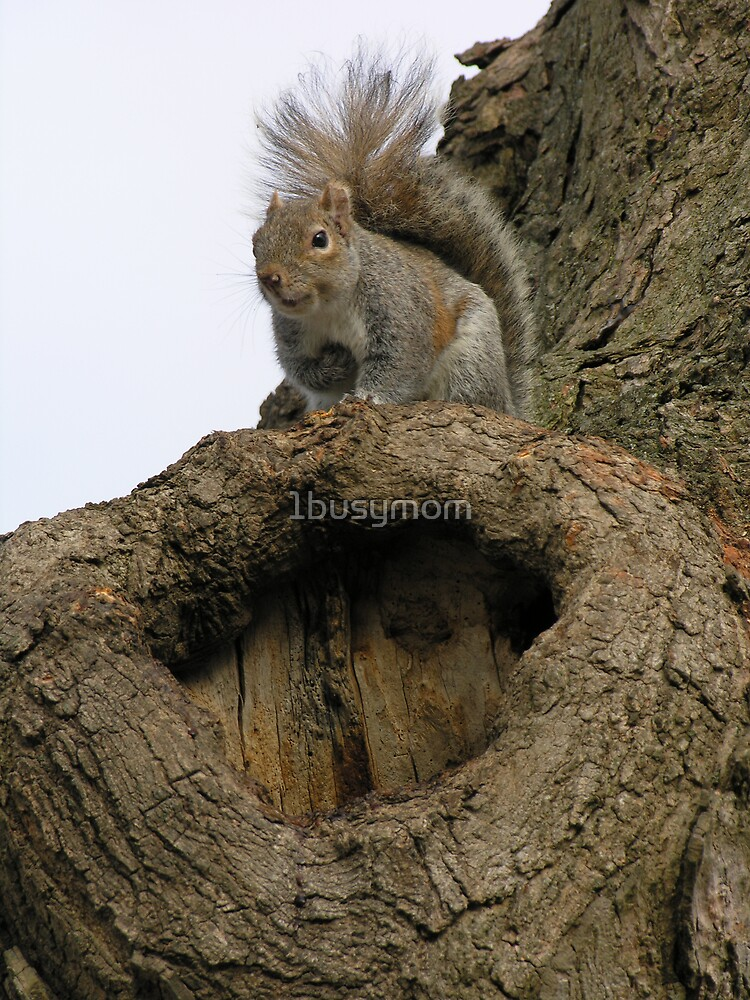 curious squirrel by 1busymom