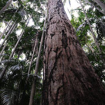 rainforest by jessrobbo