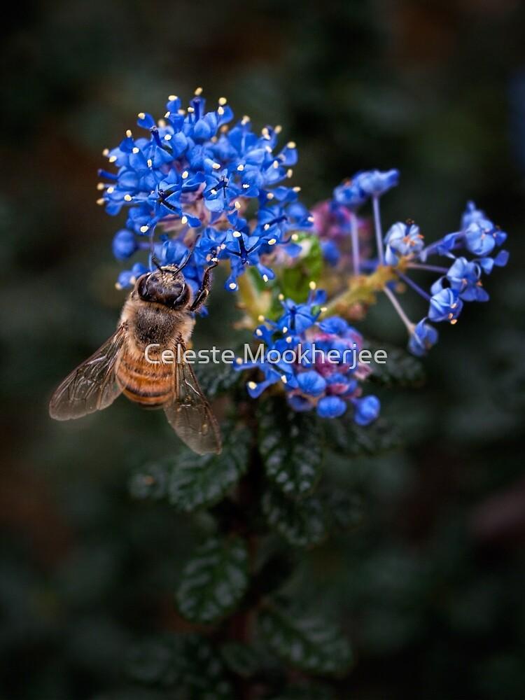 Biene auf Ceanothus von Celeste Mookherjee