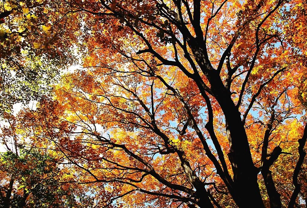 Wild Autumn by Debbie Oppermann