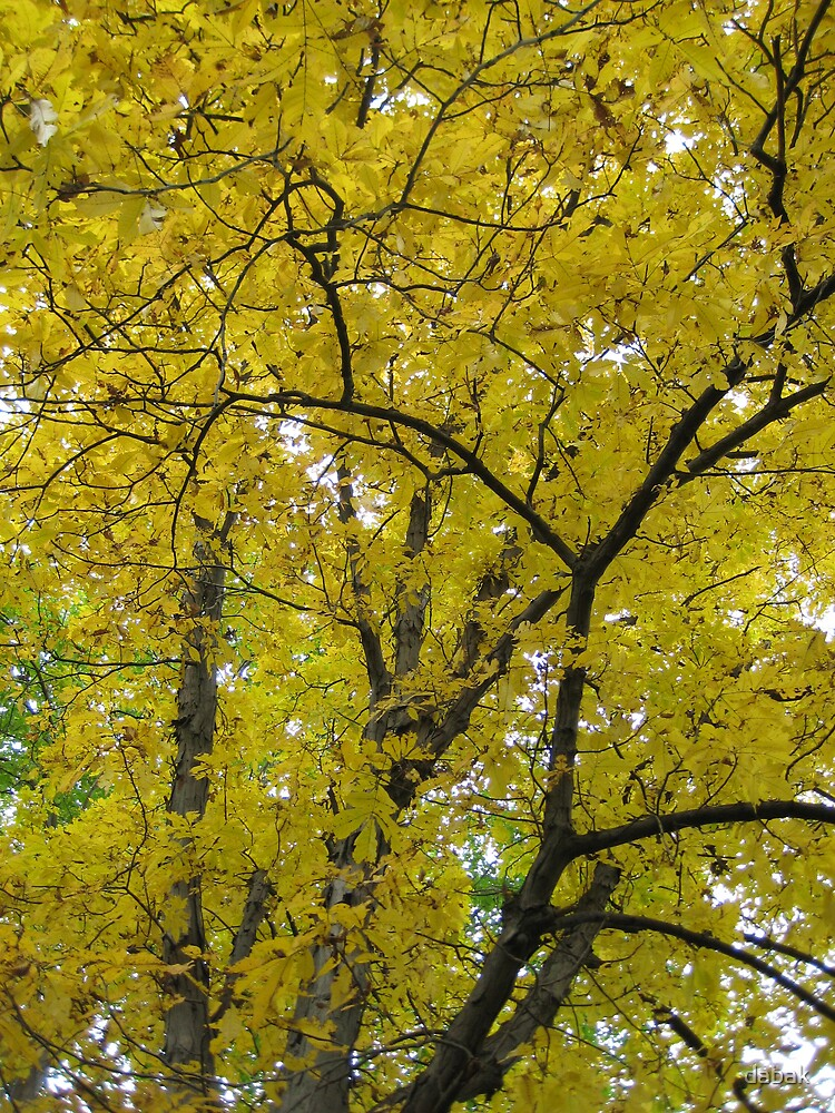 Yellow leaves that sound... like it is... by dabak