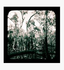 Bush Country Photographic Print