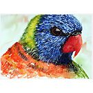 Rainbow Lorikeet by Paul Gilbert