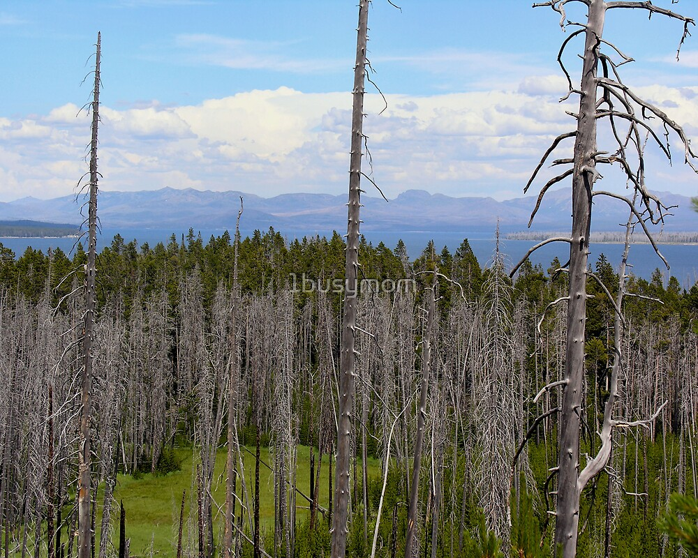 yellowstone view by 1busymom