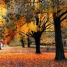 Autumn Serenade  by Jessica Jenney
