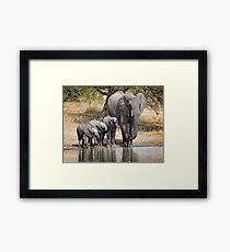 Elephant Mom and Babies Framed Print