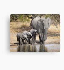 Elephant Mom and Babies Metal Print
