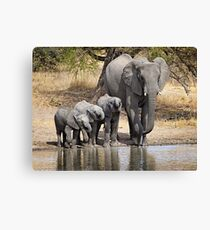 Elephant Mom and Babies Canvas Print