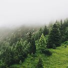 Foggy mysterious forest photography by brabikate