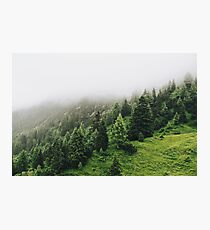 Foggy mysterious forest photography Photographic Print
