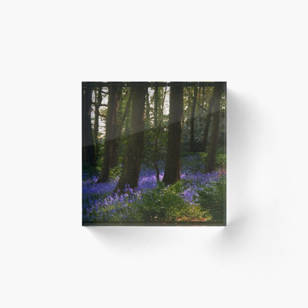 bluebell wood…. by Phil Darby Acrylic Block