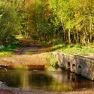 Autumn Bridge by Ann Garrett