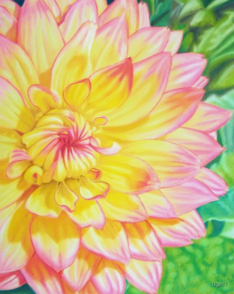 Sun drenched dahlia\