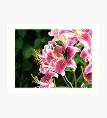 Star Gazer Lily with Spicebush swallowtail butterfly Art Print