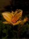 Day Lily by Elaine Teague