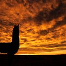 Llama Colorado Sunrise by Sarah Matula Photography