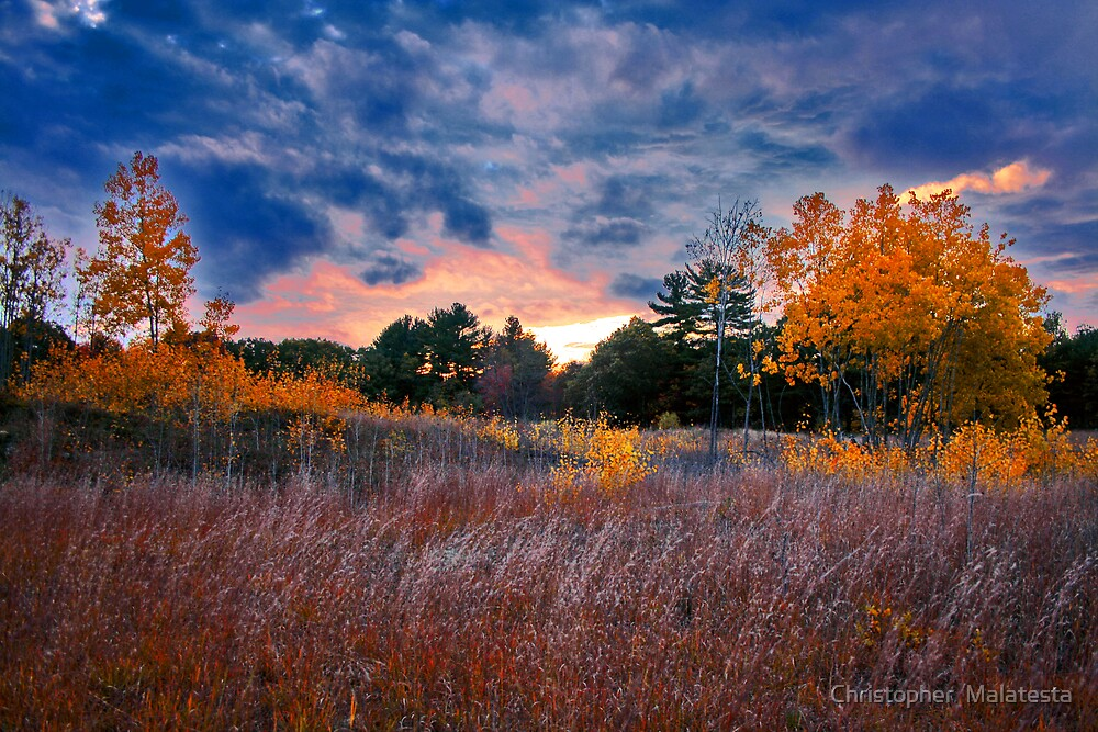 Open Spaces  by Christopher  Malatesta