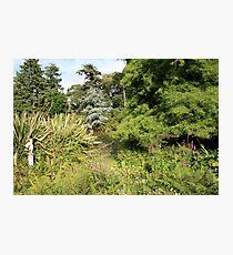 Altamont Gardens Photographic Print