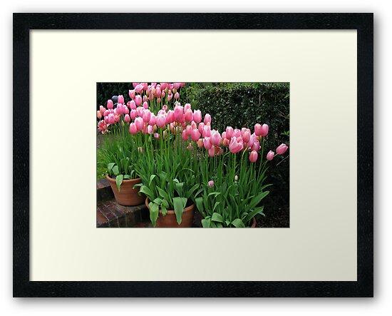 Pink Tulips by Betty Mackey
