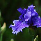 Purple Rain by Debbie Oppermann