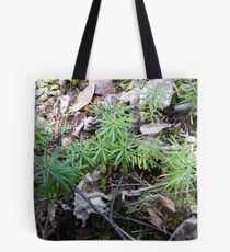 Baby Spruce Trees Tote Bag
