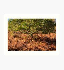 Autumn Tree and Ferns Art Print