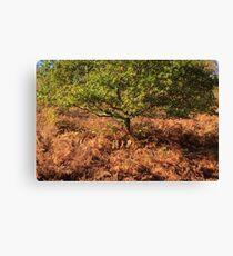 Autumn Tree and Ferns Canvas Print