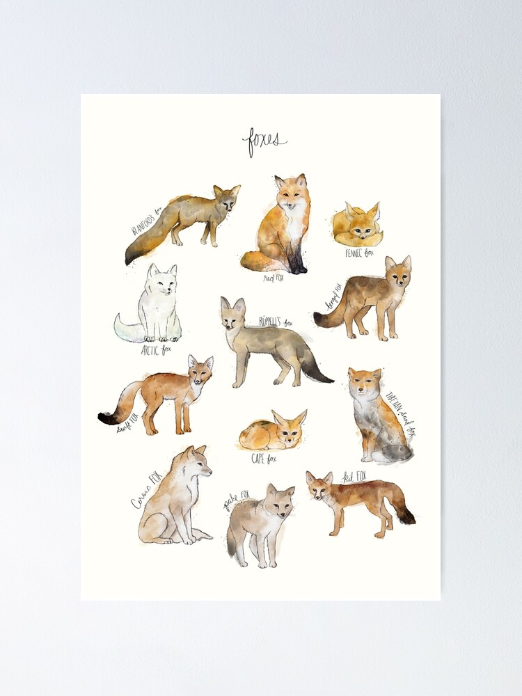 Alternate view of Foxes Poster