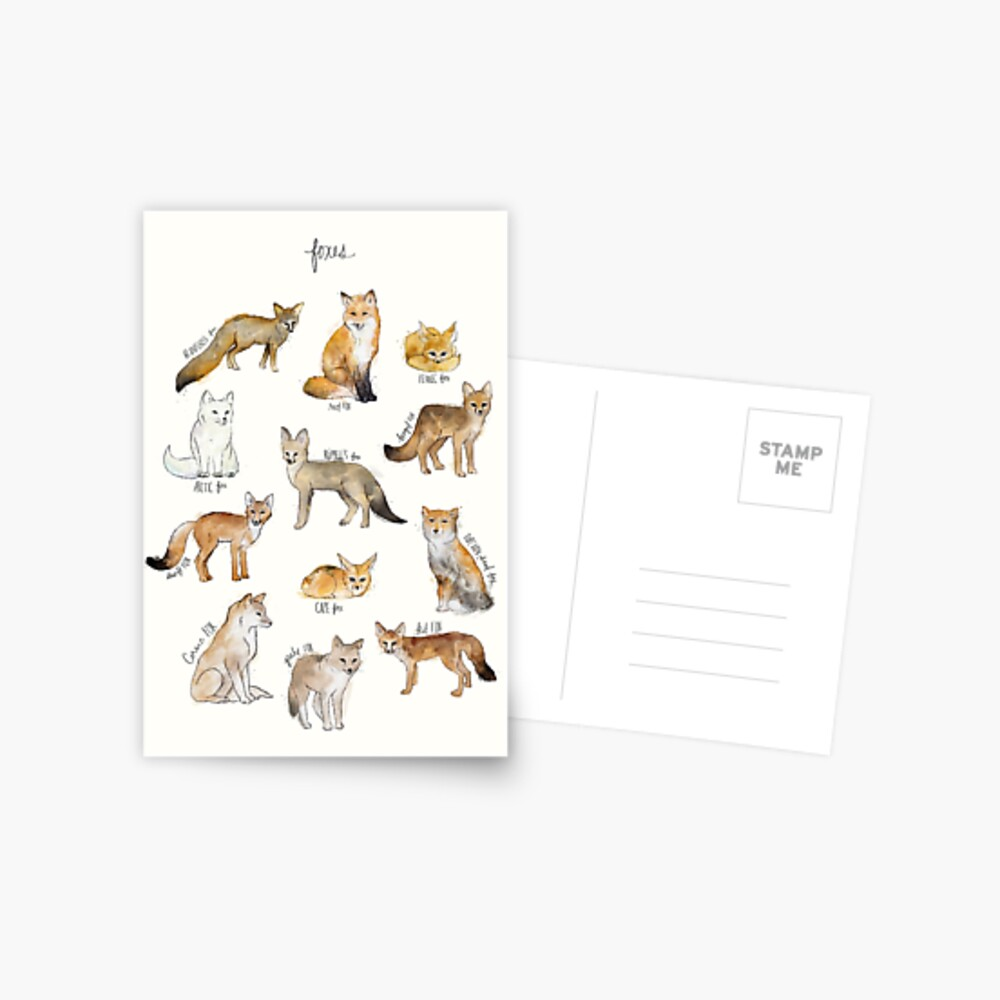Foxes Postcard