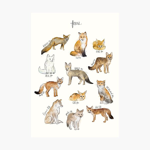 Foxes Photographic Print